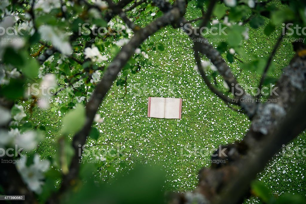 vintage book in apple blossoms stock photo