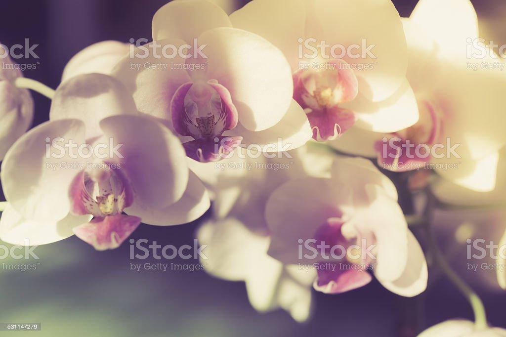 vintage branch of white orchid selekt fokus stock photo