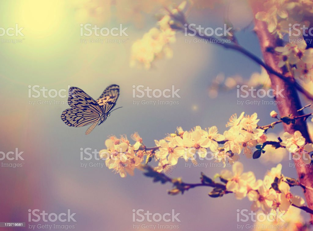 Vintage butterfly and cherry tree flowers stock photo
