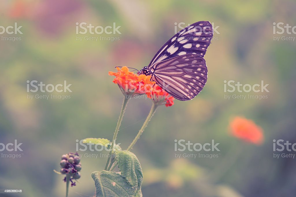 Vintage butterfly and orange color flower in spring. Vintage style. stock photo