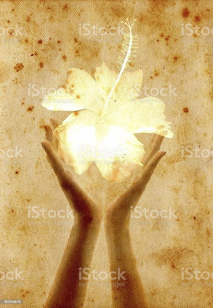 Vintage card with hands cupping pressed flower silhouette royalty-free stock photo