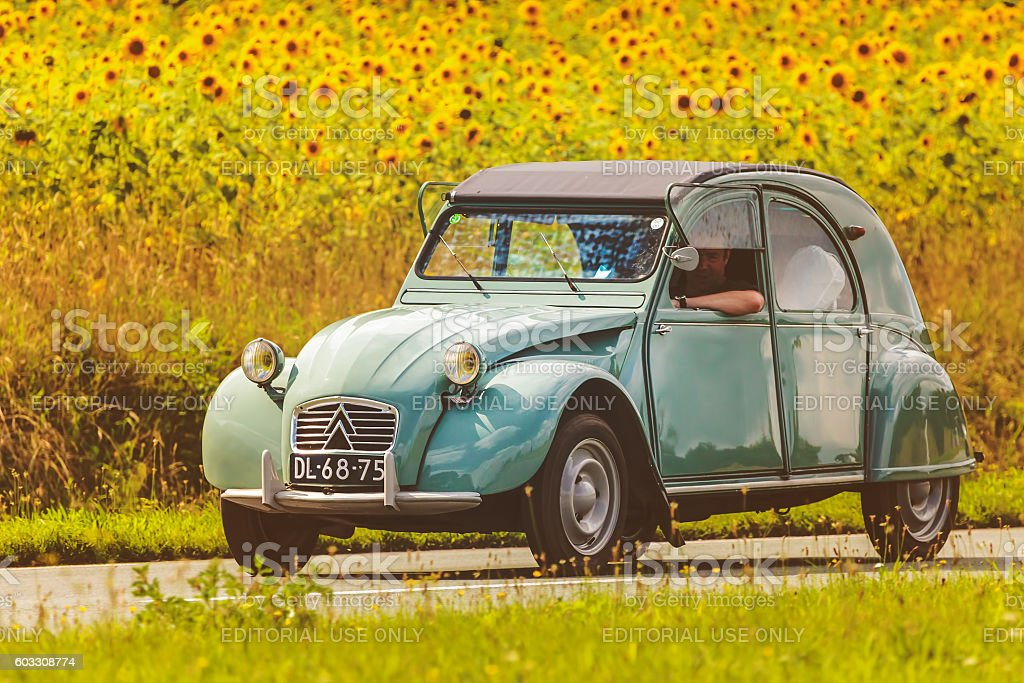 Vintage Citroen 2CV in front of blooming sunflowers stock photo