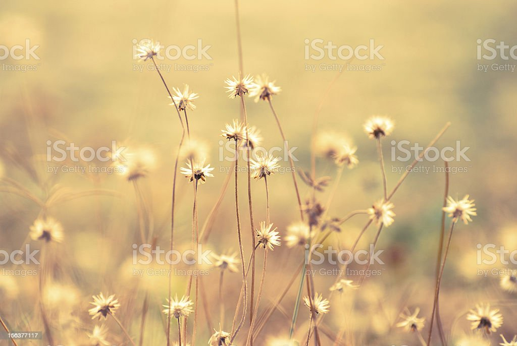 Vintage Color of  Grass royalty-free stock photo