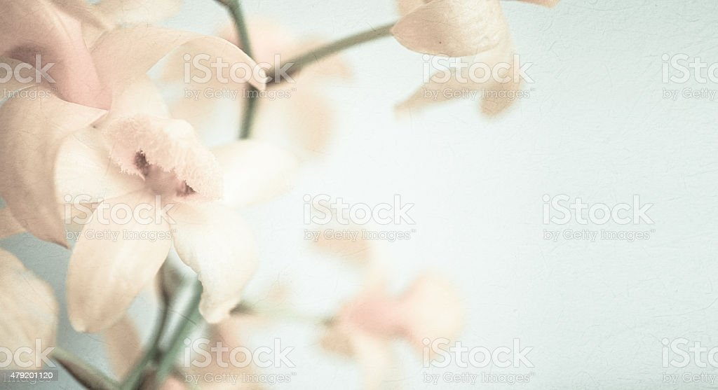 vintage color orchids in soft color and blur style stock photo