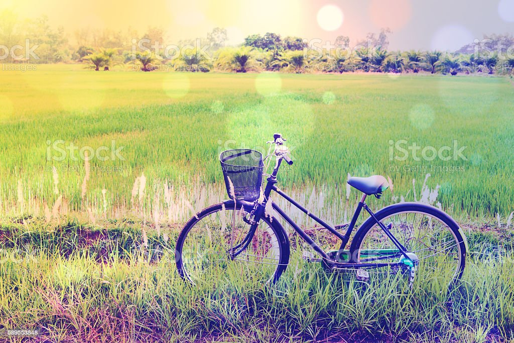 Vintage color style: Japanese old bike in a paddy field. stock photo