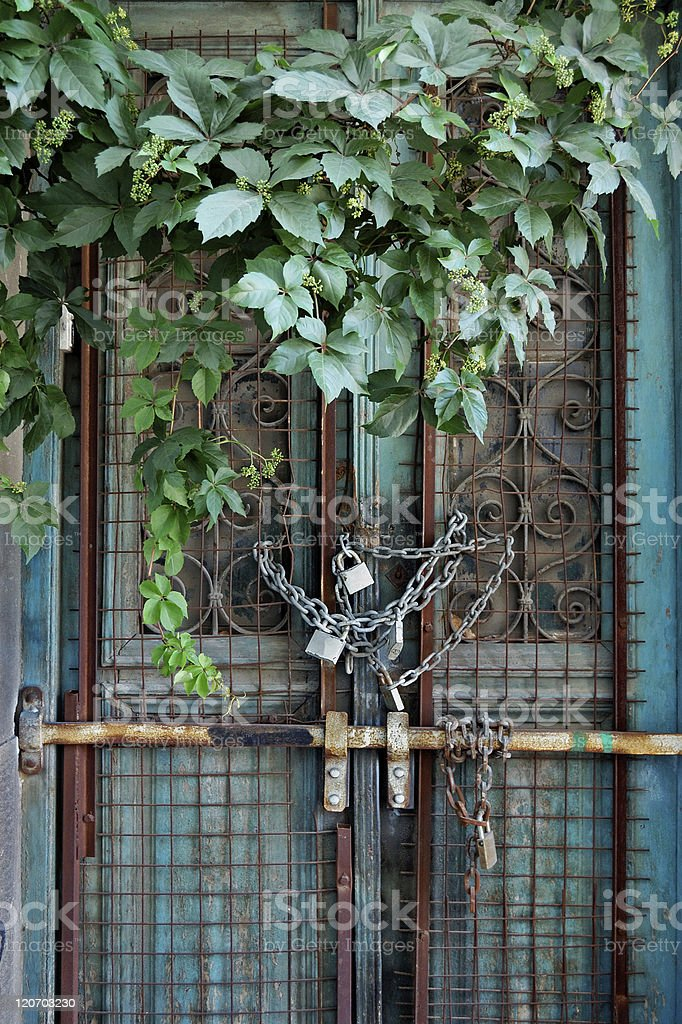 vintage door and overgrown plant royalty-free stock photo