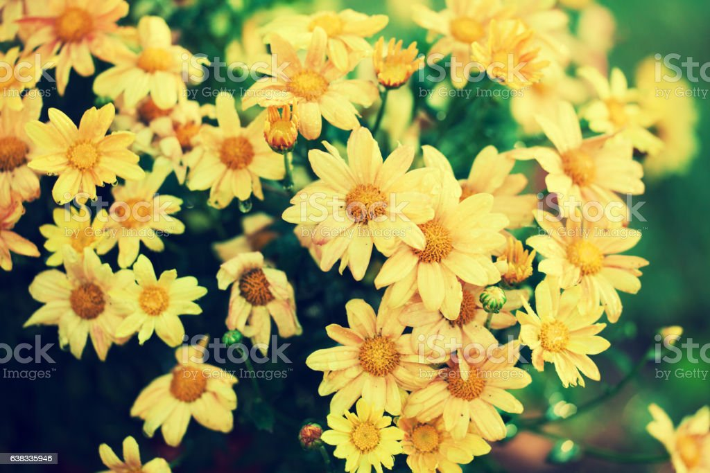 Vintage flower background in rainy weather stock photo