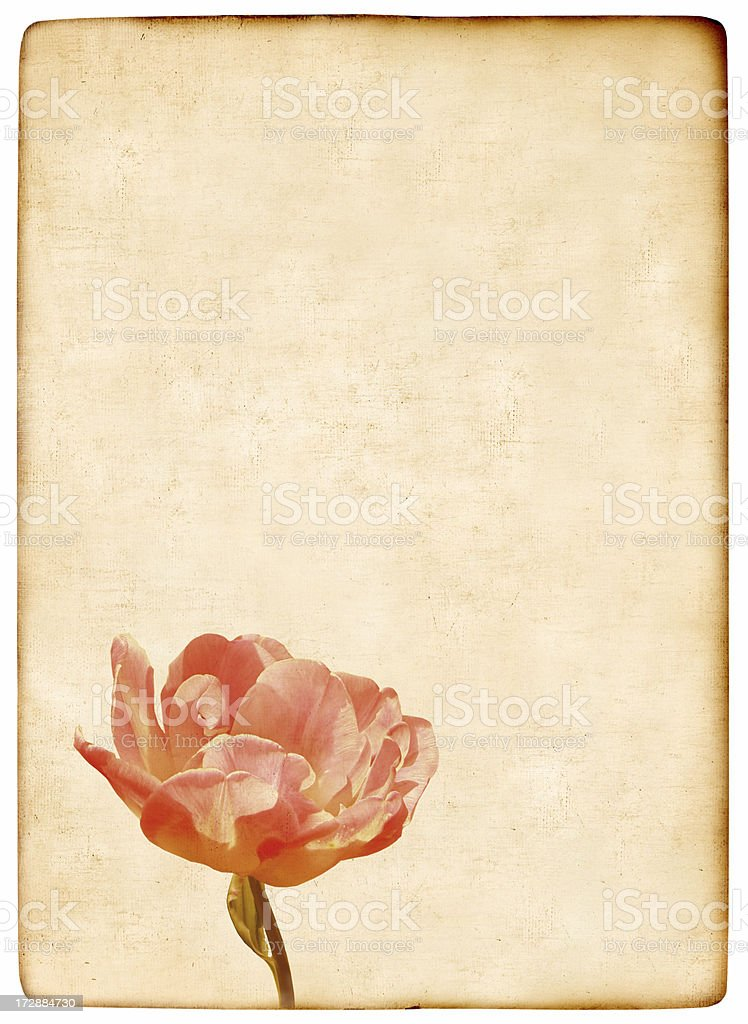 Vintage flower background stock photo