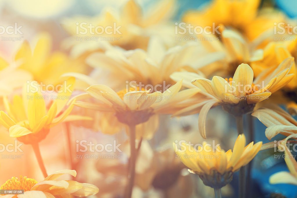 Vintage flower lawn for background stock photo