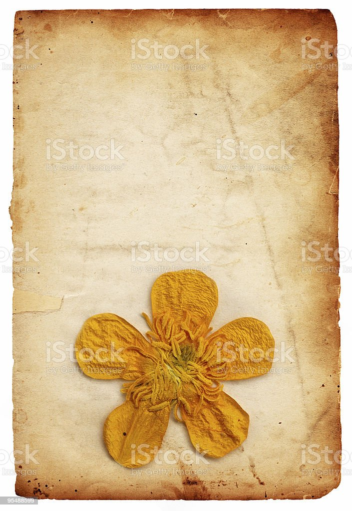 Vintage Flower Paper XXXL royalty-free stock photo