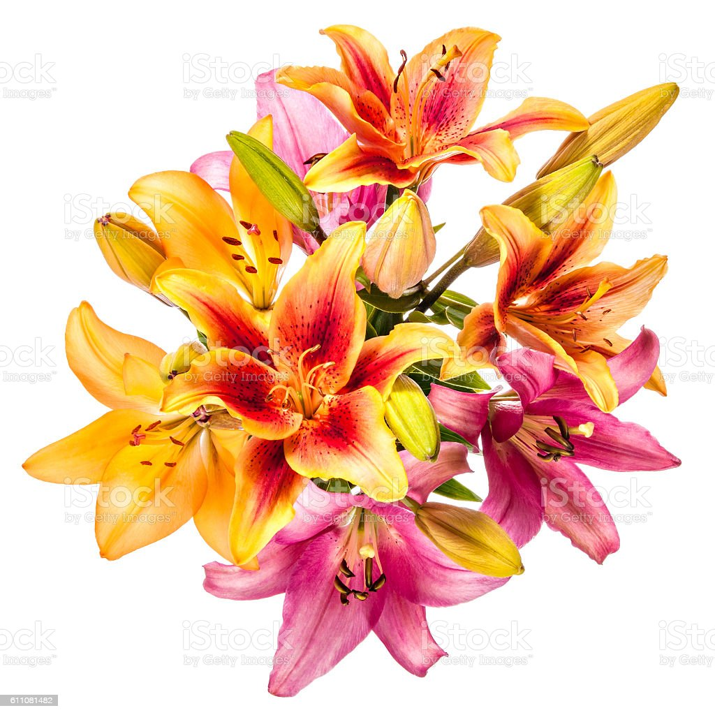 Vintage flowers pattern with lilies isolated on white background stock photo