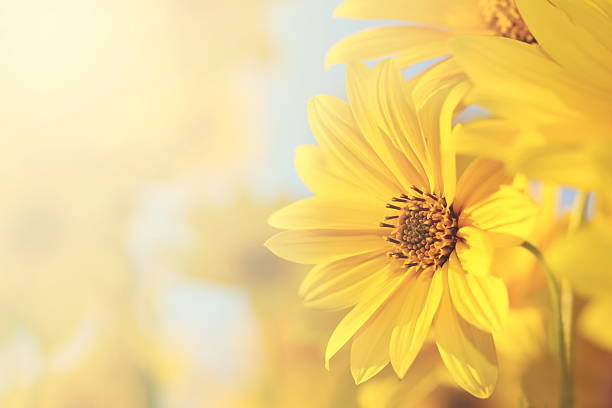flowers pictures, images and stock photos  istock, Beautiful flower