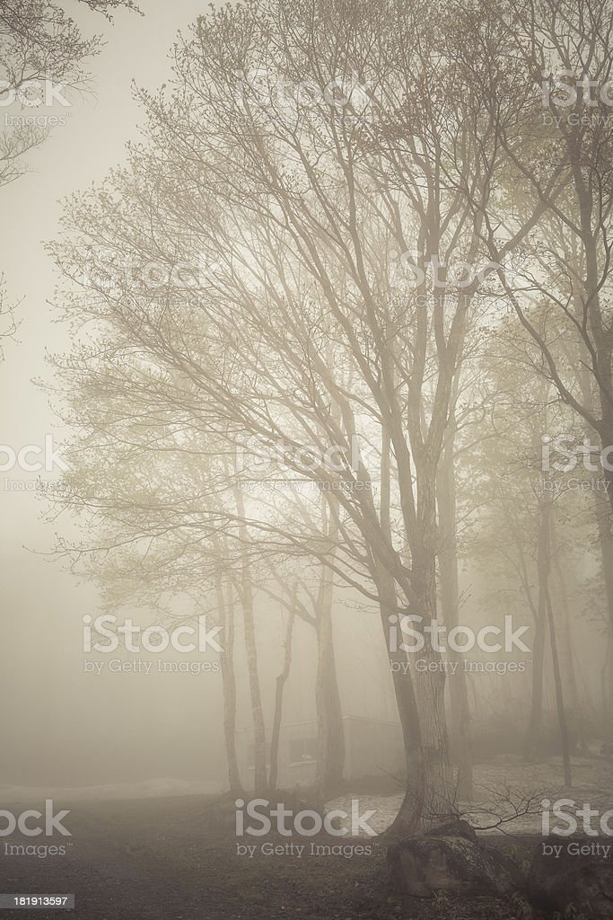 vintage forest royalty-free stock photo