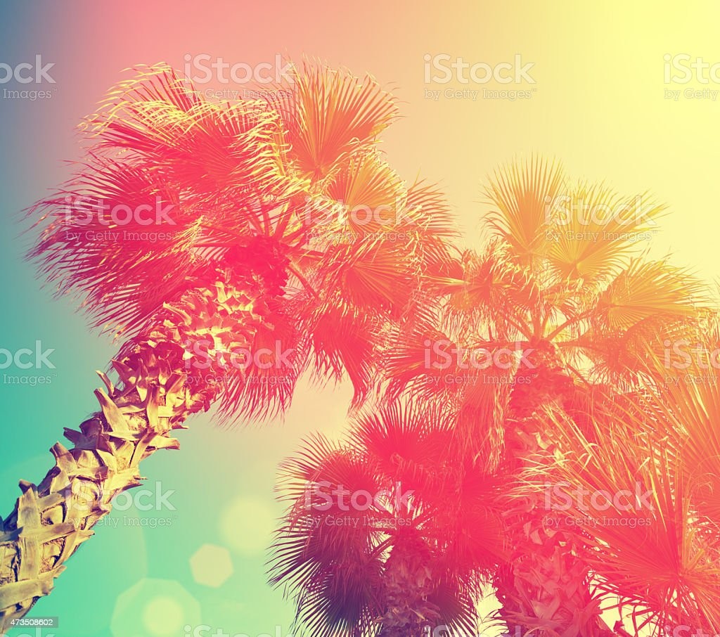 Vintage frame with tropic palm trees against sky stock photo
