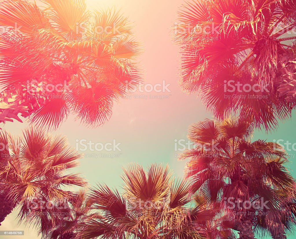 Vintage frame with tropic palm trees stock photo