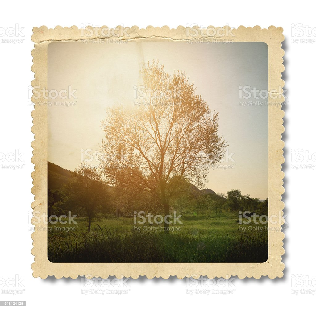 Vintage Golden Tree (Clipping Path) stock photo