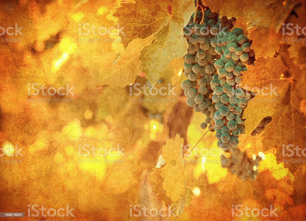 vintage image of grape royalty-free stock photo