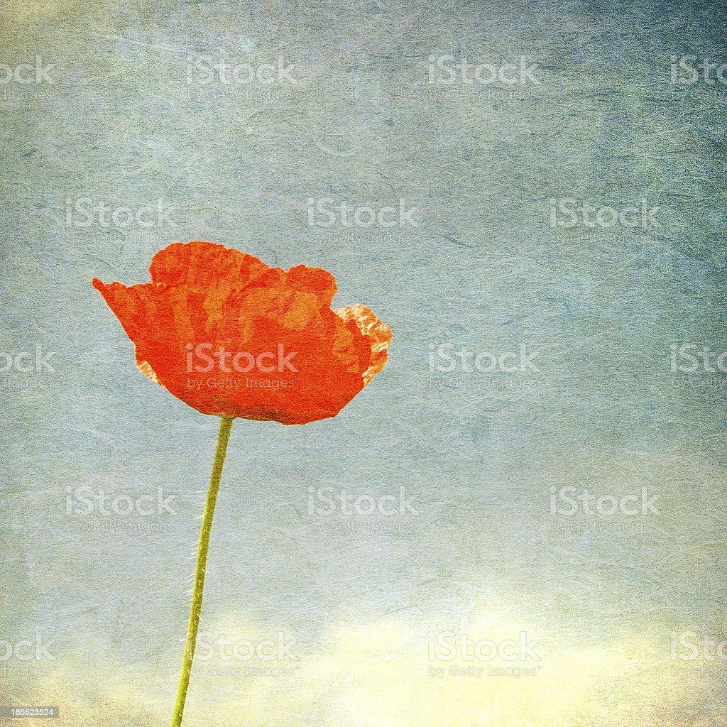 Vintage image of poppy royalty-free stock photo