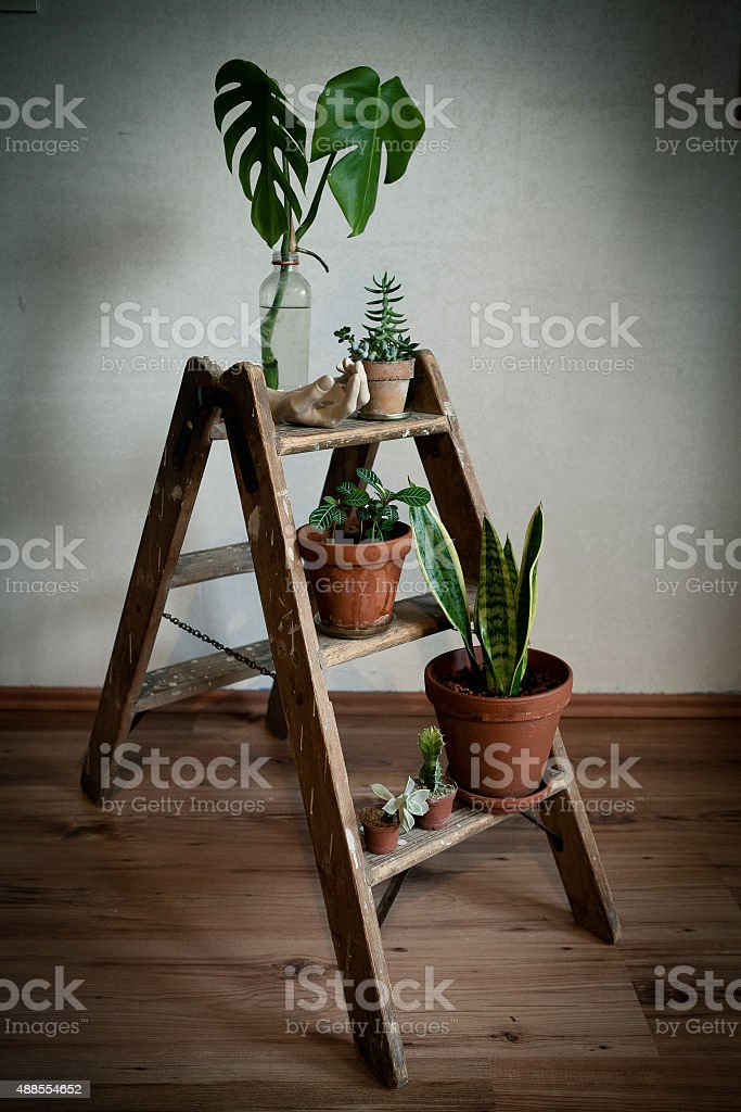 vintage ladder with plants stock photo
