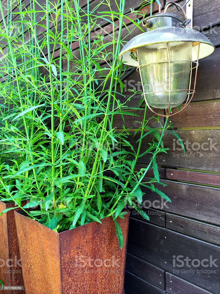 Vintage lantern and green plant in a rusty pot stock photo