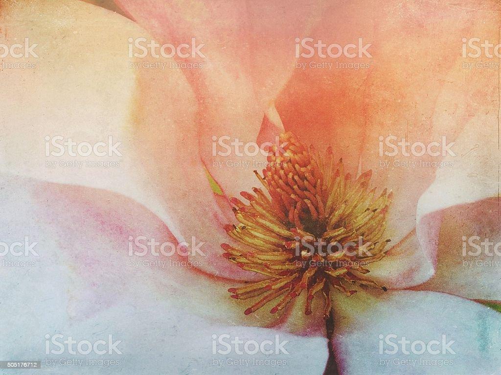 Vintage Magnolia Flower stock photo