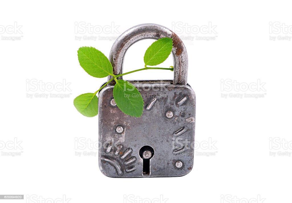 Vintage padlock and green plant stock photo