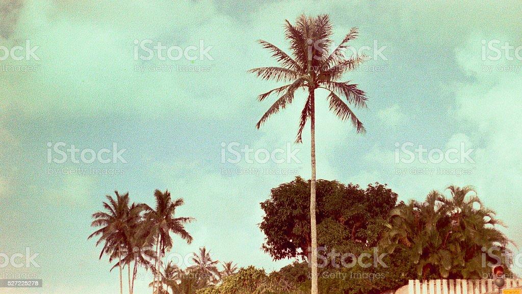 Vintage palm tree stock photo
