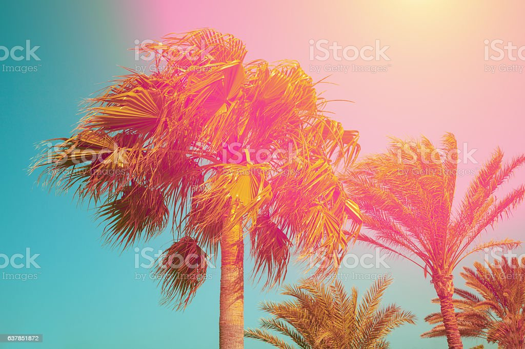 Vintage palm trees against sky at sunset stock photo