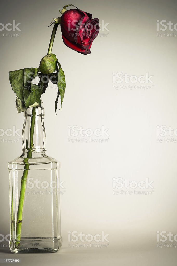 vintage parched roses royalty-free stock photo