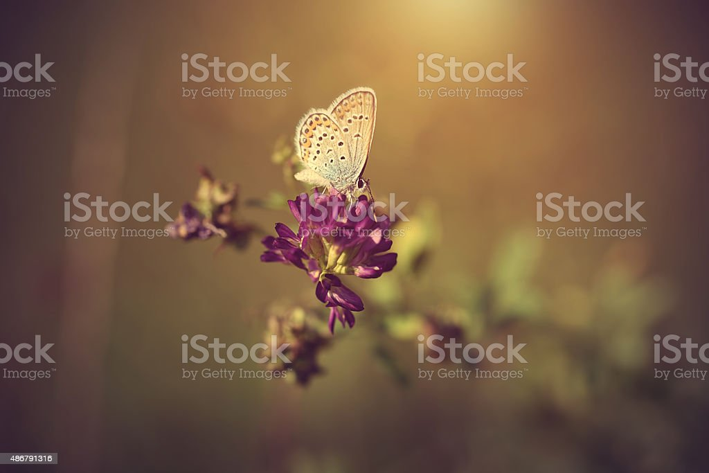Vintage photo of a butterfly at sunset stock photo