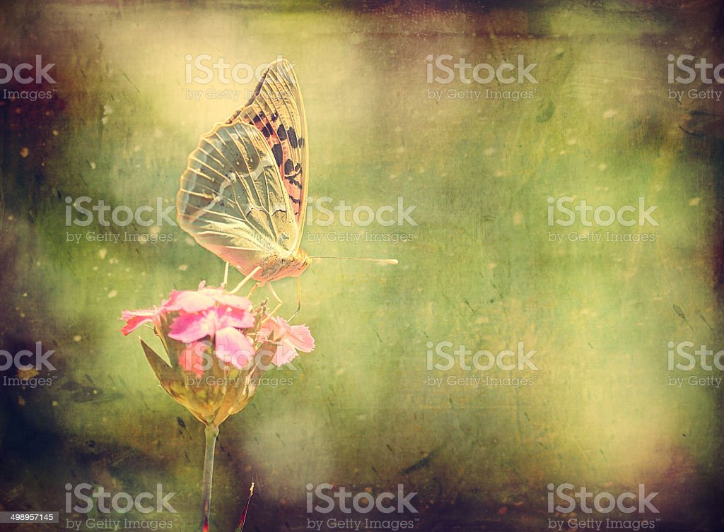 Vintage photo of a butterfly stock photo