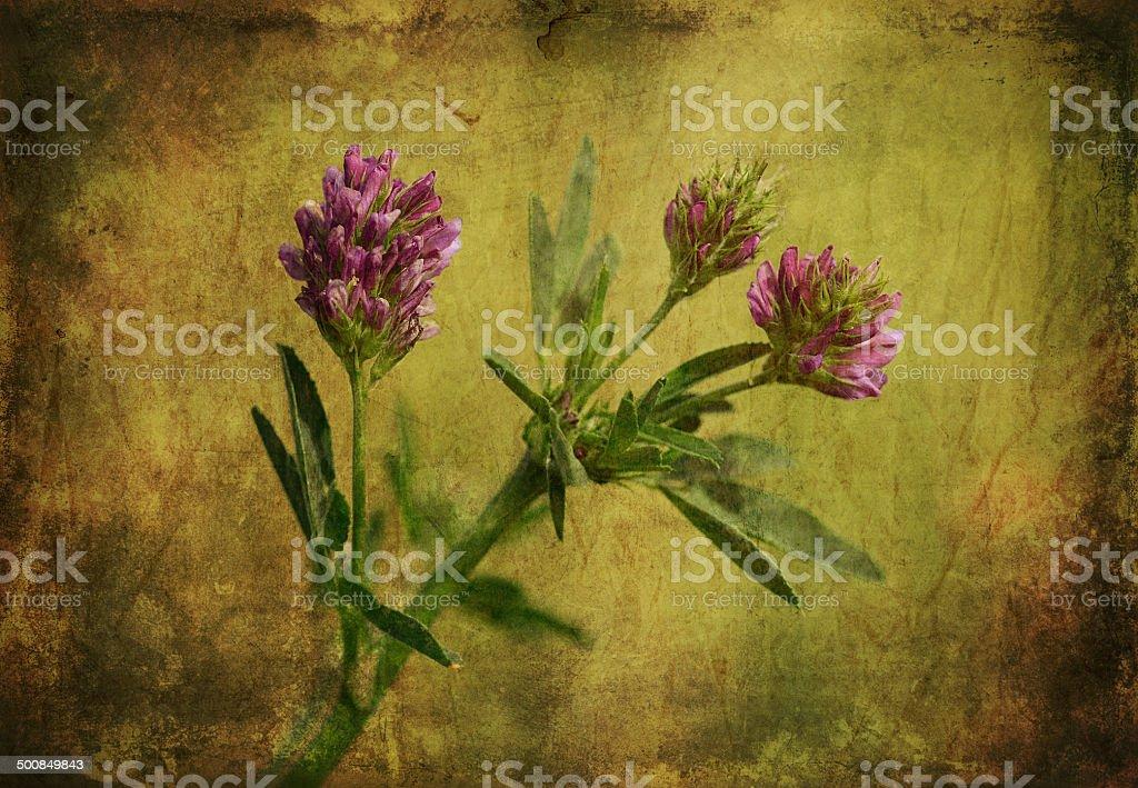 Vintage photo of a purple wildflower stock photo
