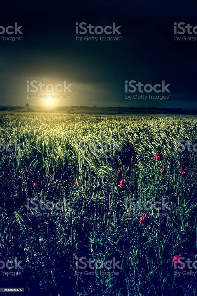 Vintage photo of agricultural scene in sunset royalty-free stock photo