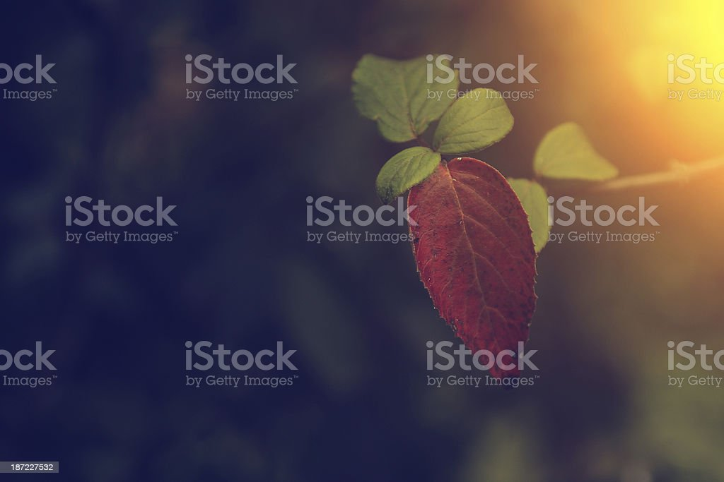Vintage photo of autumn leaves royalty-free stock photo