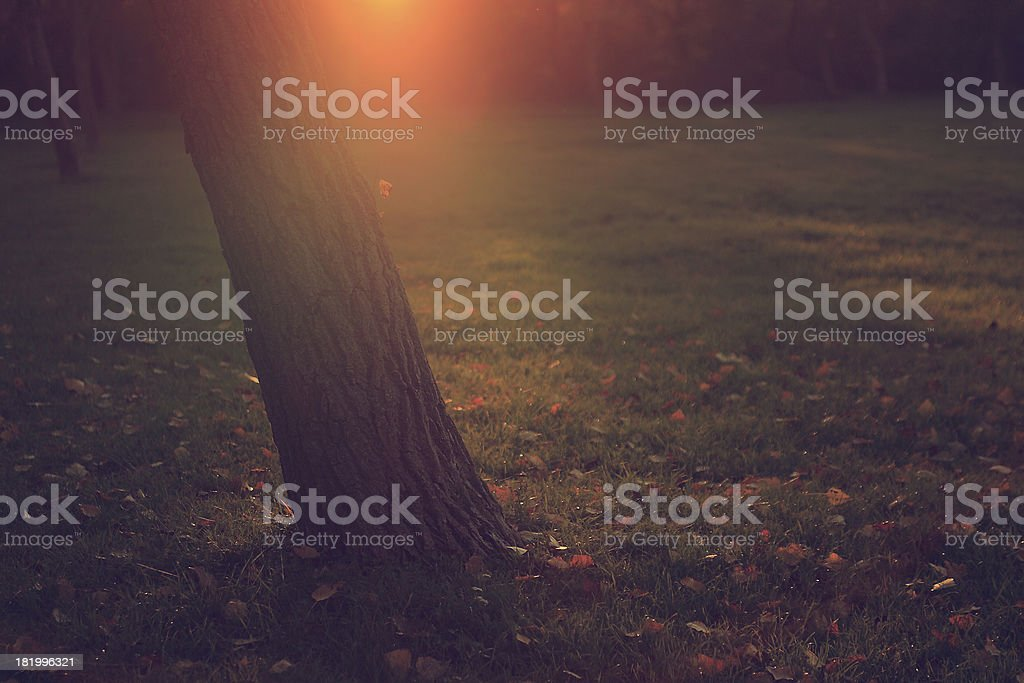 Vintage photo of autumn leaves under tree royalty-free stock photo