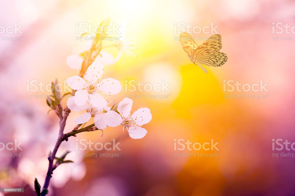 Vintage photo of butterfly and flower stock photo