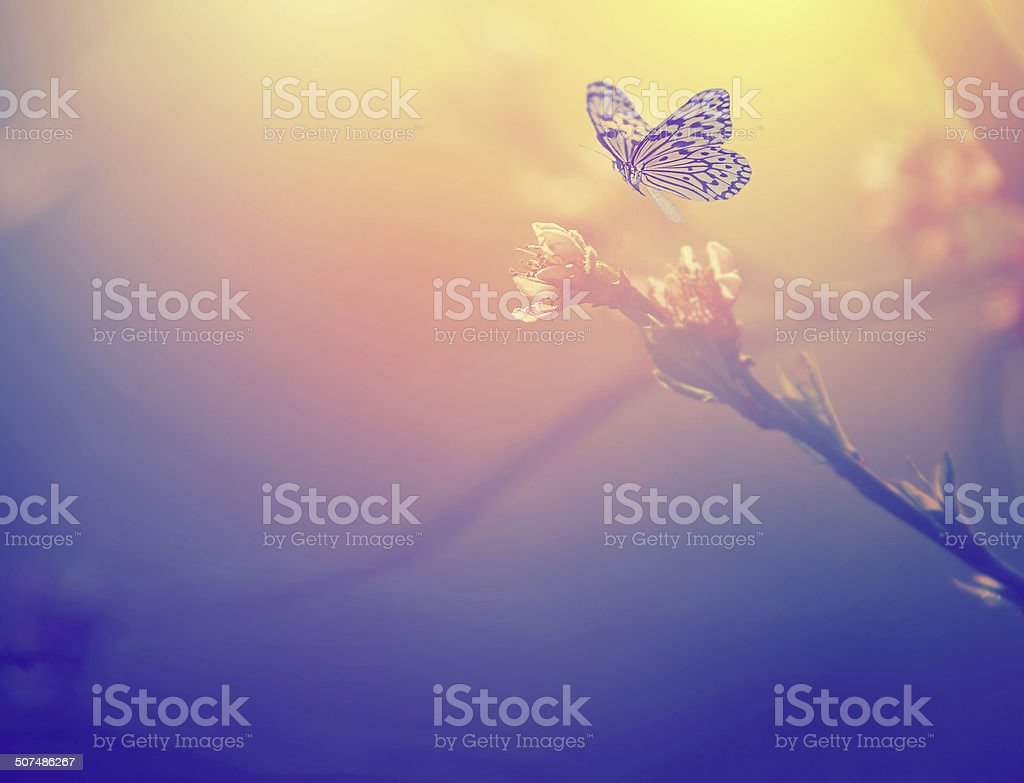 Vintage photo of butterfly and pink tree flower stock photo