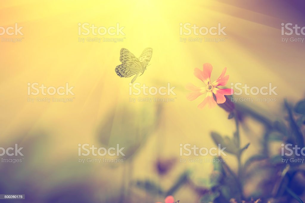 Vintage photo of butterfly stock photo