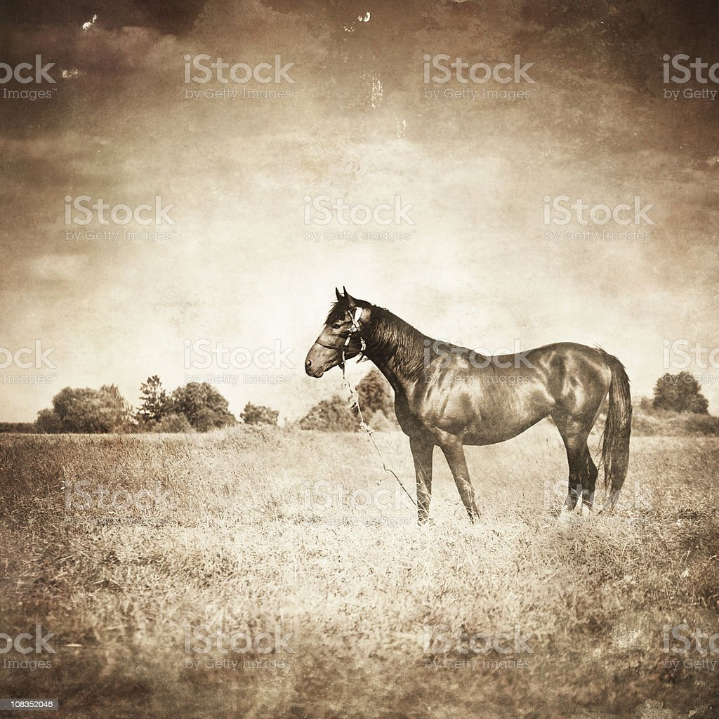 Vintage photo of horse royalty-free stock photo