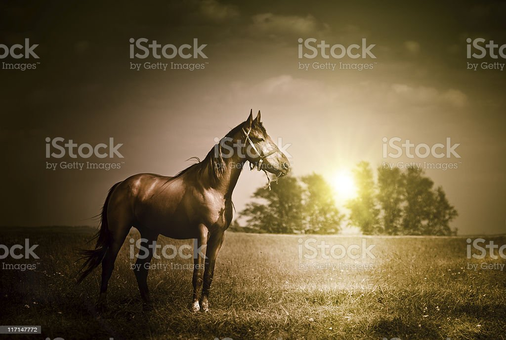 Vintage photo of horse royalty-free stock photo