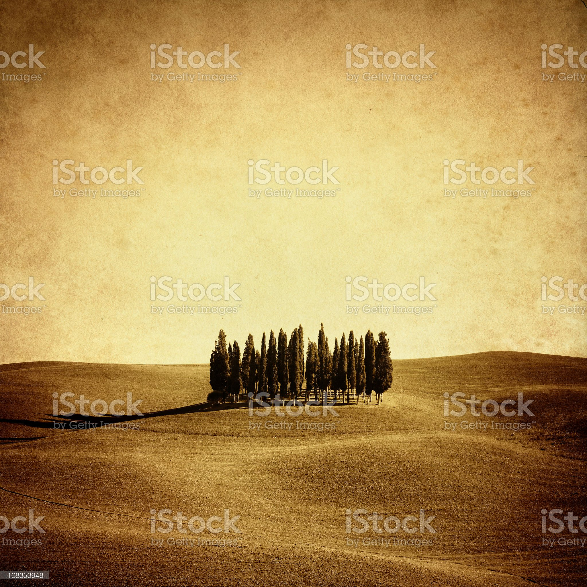 Vintage photo of italian cypresses royalty-free stock photo