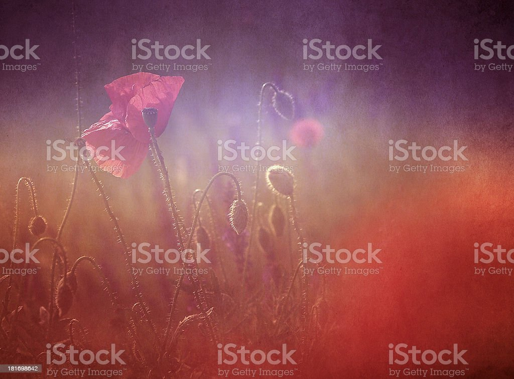 Vintage photo of poppy with old paper texture royalty-free stock photo