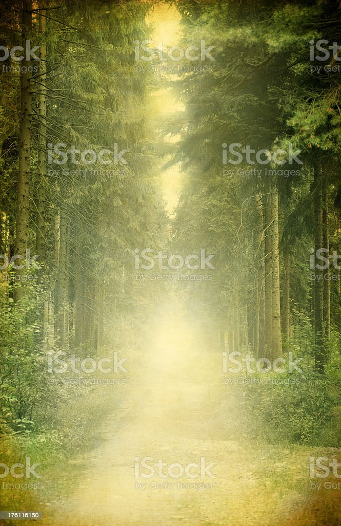 Vintage Pine Trees In Forest – Toned Image royalty-free stock photo