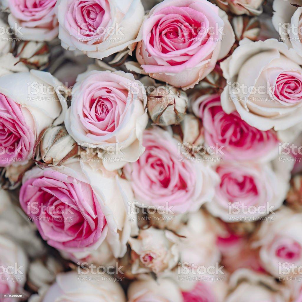 Vintage pink roses background, vintage decoration stock photo