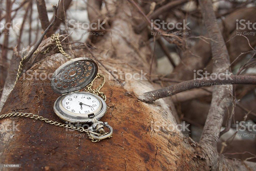 빈티지 포켓 시계도 나무줄기 royalty-free 스톡 사진