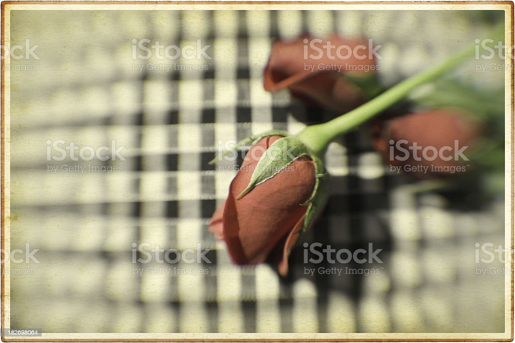 Vintage Rose Card royalty-free stock photo