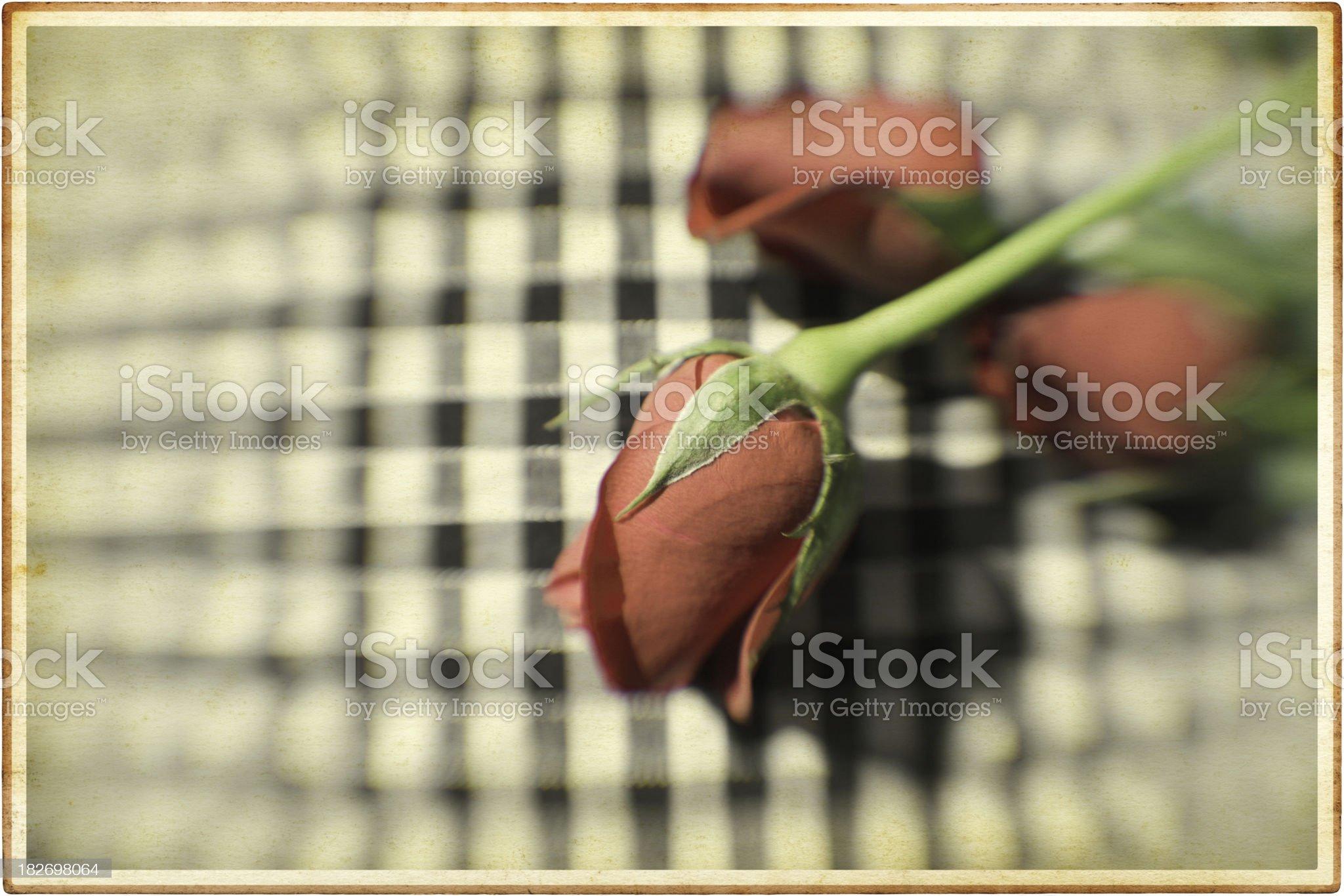 Vintage Rose Card royalty-free stock photo