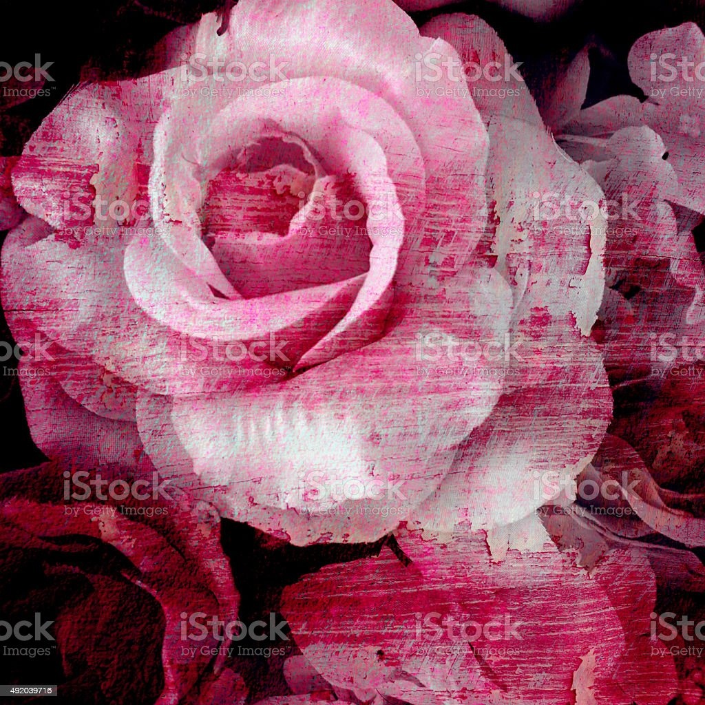 Vintage rose painted with brush stroke on wall background stock photo