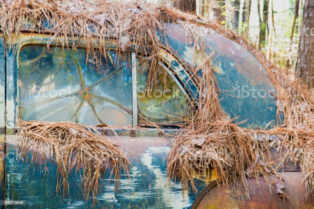 Vintage rustic car covered with pine needles. stock photo