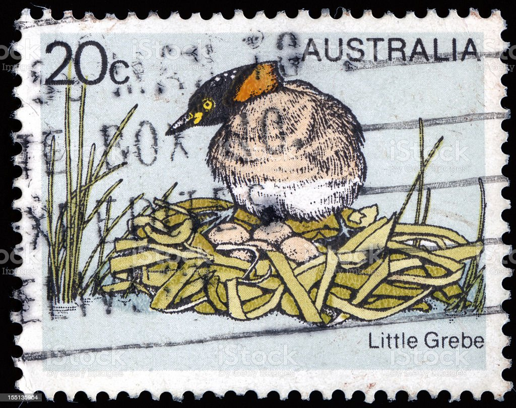 Vintage stamp from Australia with Litte Grebe stock photo